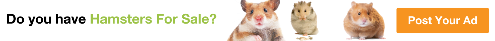 Hamsters for Sale in Buraimi